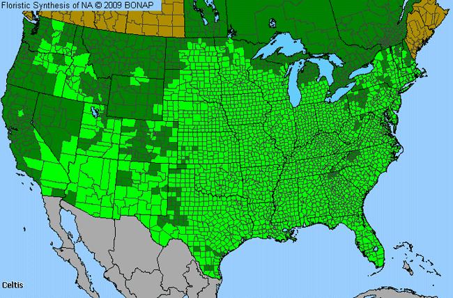 Hackberry Celtis Genus Level Details Allergy Info - Allergy in us map