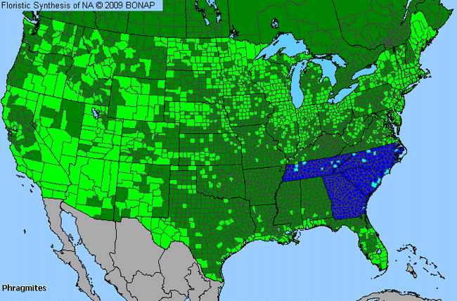 Reed Phragmites Genus Level Details Allergy Info - Allergy in us map
