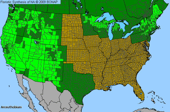 Allergies By County Map For Dwarf-Mistletoe