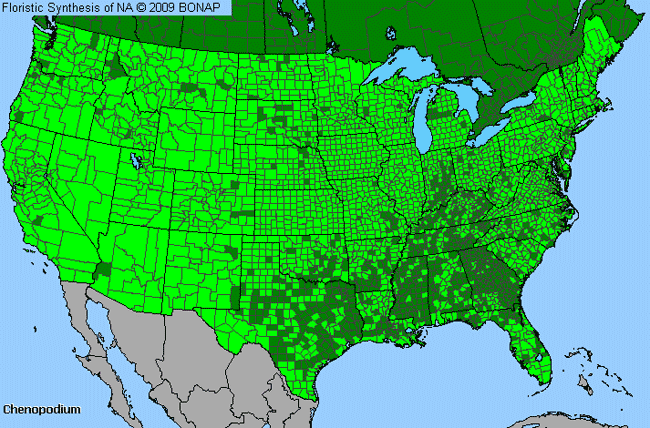 Allergies By County Map For Goosefoot, lamb's quarters