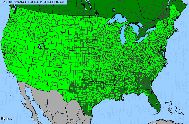 Allergies By County Map For Bottle-Brush Grass, Wild Rye
