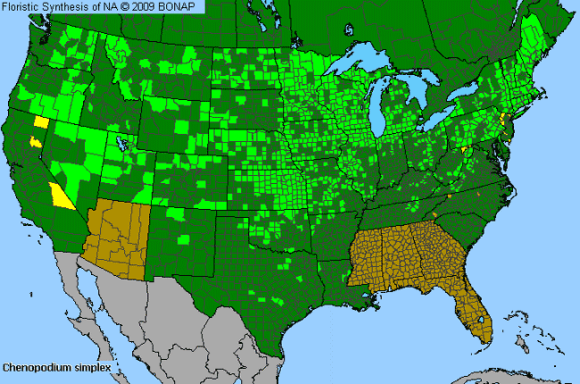 Allergies By County Map For Giant-Seed Goosefoot