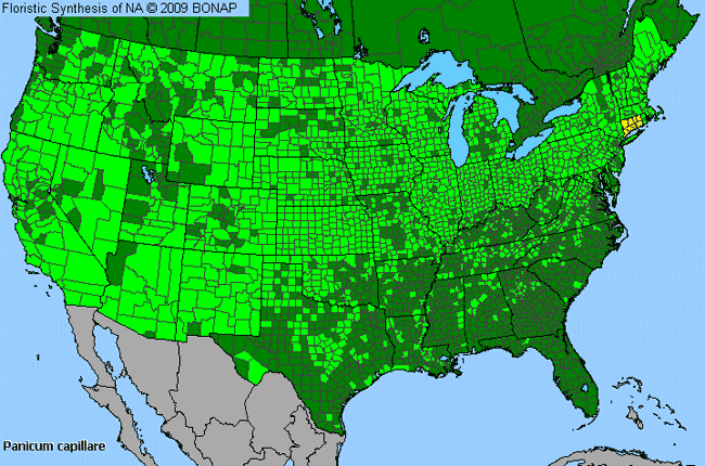 Allergies By County Map For Common Panic Grass