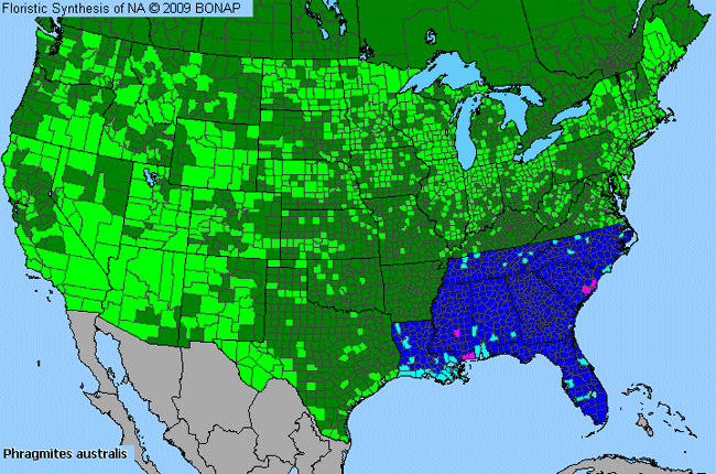 Allergies By County Map For Common Reed