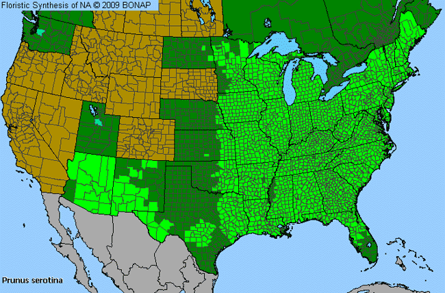 Allergies By County Map For Black Cherry