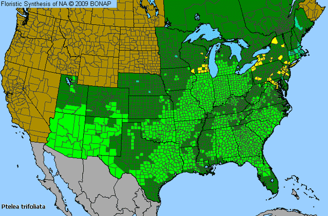 Allergies By County Map For Common Hoptree