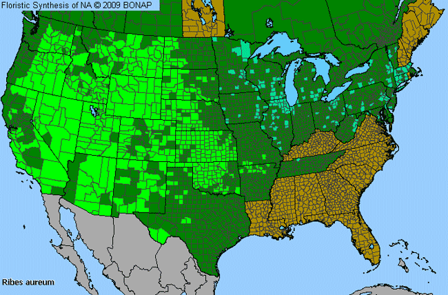 Allergies By County Map For Golden Currant