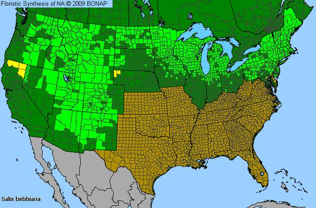 Allergies By County Map For Gray Willow