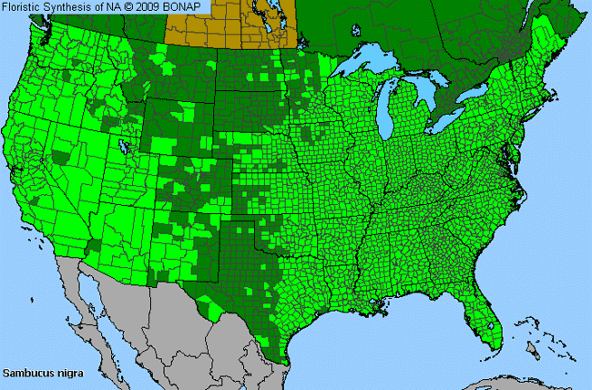 Allergies By County Map For Black Elder