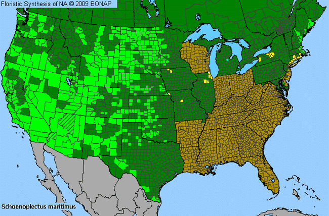 Allergies By County Map For Saltmarsh Club-Rush