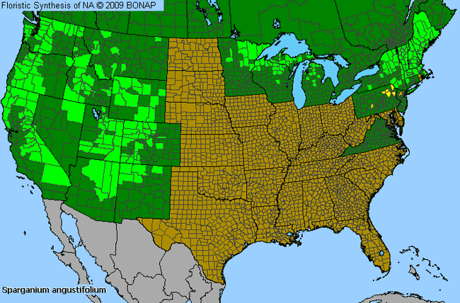 Allergies By County Map For Narrow-Leaf Burr-Reed