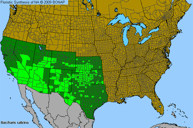 Great Plains False Willow Baccharis Salicina Species Details And - Us map the great plains