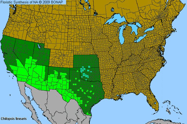 DesertWillow Chilopsis Linearis Species Details And Allergy Info - Map of the us deserts