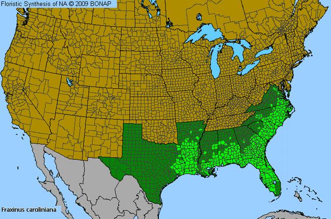 Allergy Map Of Us.Carolina Ash Fraxinus Caroliniana Species Details And Allergy Info