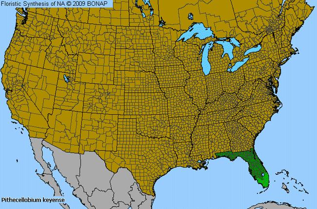 Florida Keys Blackbead Pithecellobium Keyense Species Details - Florida keys us map