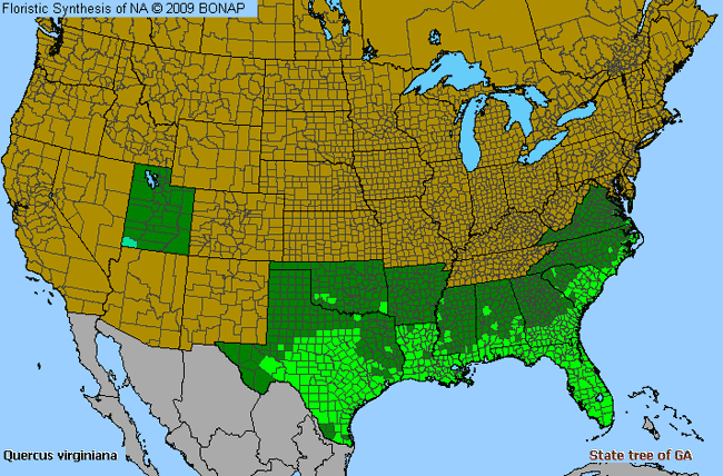 Live Oak Quercus Virginiana Species Details And Allergy Info - Allergy in us map