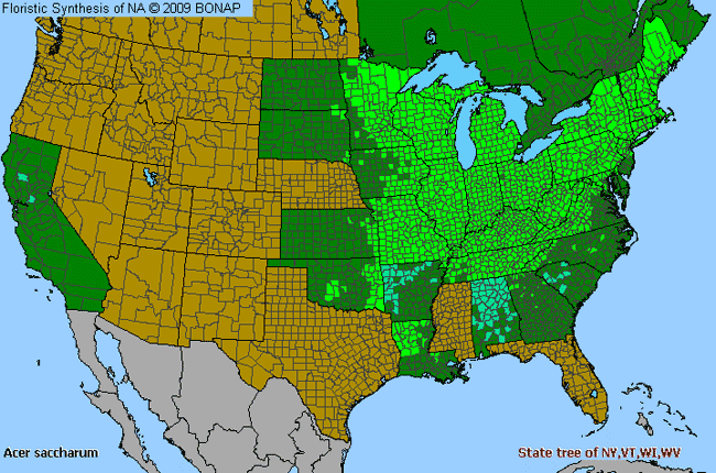 Allergies By County Map For Sugar Maple