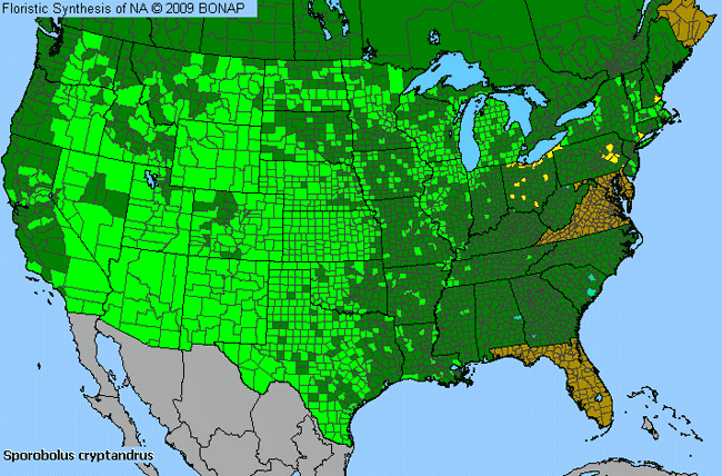 Allergies By County Map For Sand Dropseed