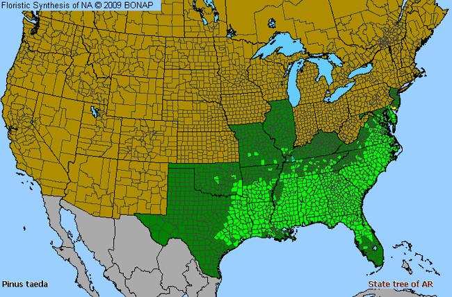 Southern Yellow Pine Distribution
